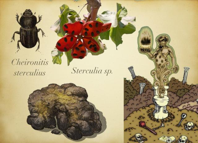 Sterculius el dios del Estiercol y su homenaje en una especie animal y otra vegetal