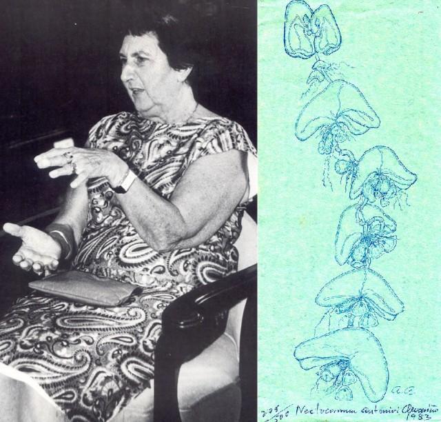Ángeles Alvariño y uno de sus dibujos. En él, retrata detalladamente a la medusa Nectocarmen Antonioni que descubrió en 1983 y cuyo nombre hace honor a sus padres Carmen y Antonio. Fuente: Consejo de Cultura Gallega.