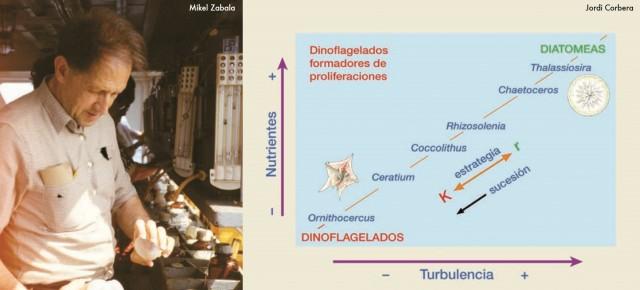 A la izquierda, en un laboratorio, Ramón Margalef y, a la derecha, su mandala, con el que consiguió relacionar variables como la cantidad de nutrientes o turbidez de las aguas con la aparición de determinados tipos de fitoplancton. Fuente: Instituto de Ciencias del Mar, Barcelona.