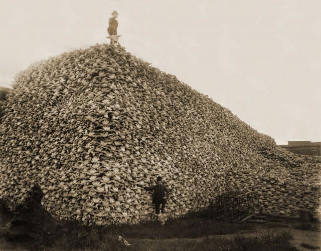 1892 montaña de calaveras de búfalos aguardando a ser trituradas para abono Burton Historical Collection, Detroit Public Library, Public Domain,