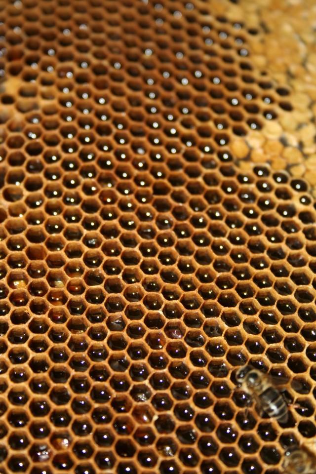 Figura 1: Típica construcción hexagonal de un panal de abejas