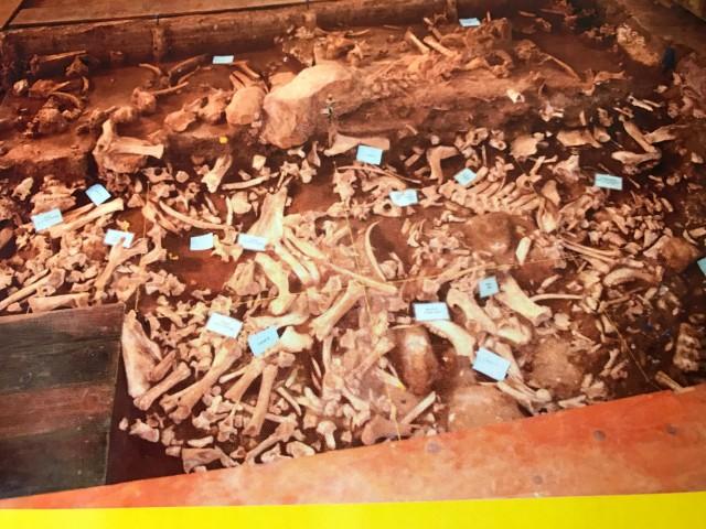 Restos óseos en Buffalo Vore Jump. El lugar fue usado durante siglos por los indios como demuestran las numerosas osamentas de bisontes halladas hoy. Foto: J. Pascual
