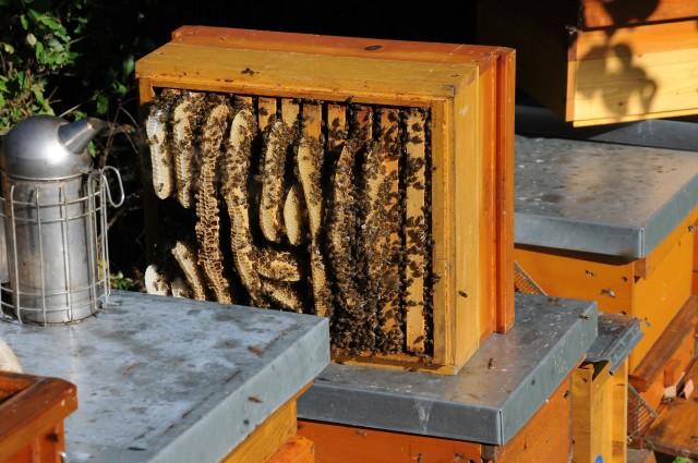 honeycomb-827475_1920