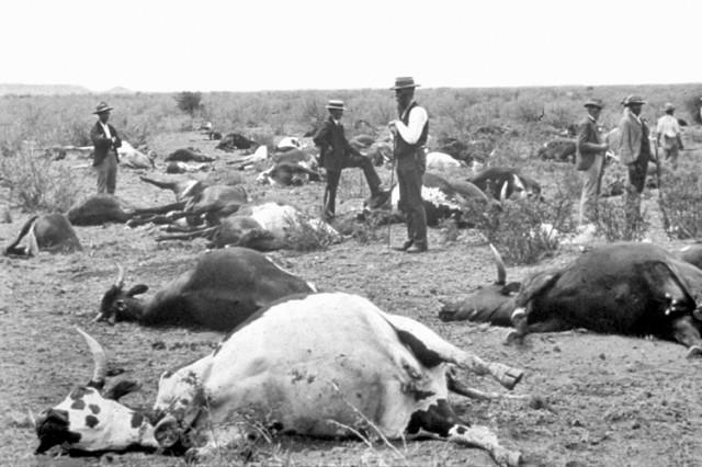 Epidemia de peste bovina. Sud África 1896