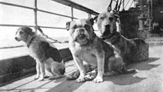 Algunos de los perros que hicieron la nefasta travesía