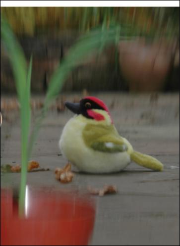 Simulación con cámara de visión de una pupila vertical. Obsérvense cómo los objetos difuminados delante y detrás del pájaro enfocado permiten dar profundidad de campo y calcular distancias Fuente: Science Advance