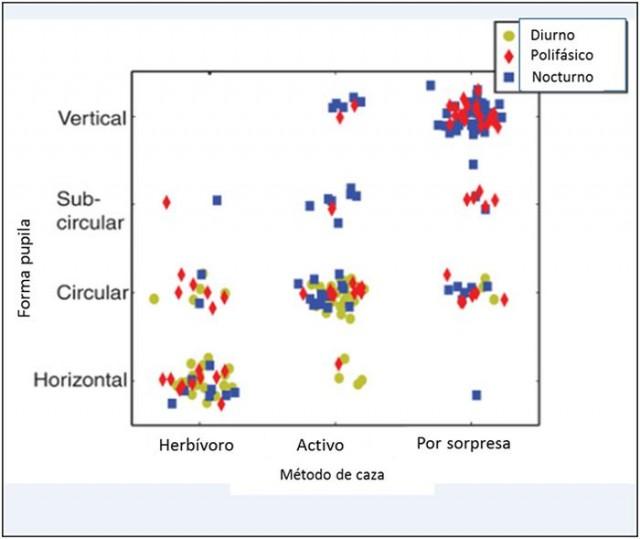 Correlación entre morfología de la pupila y dieta y modo de caza de los animales Fuente: Science Advance