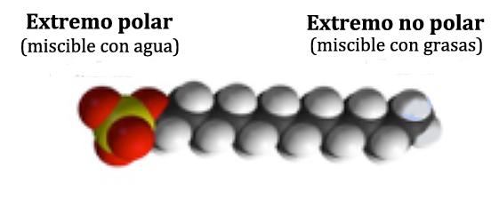 Figura 06: Estructura molecular del jabón