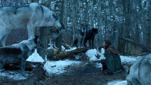 Reencuentro entre Arya y Nymeria