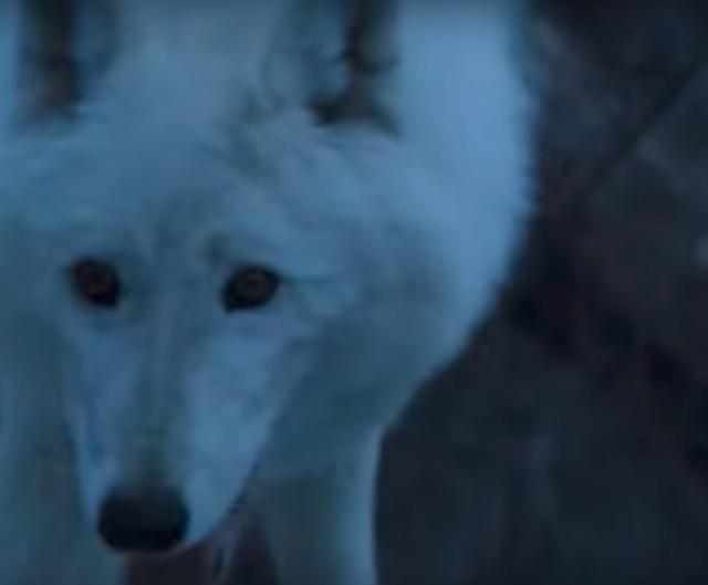 Captura de pantalla de la aparición del lobo leucístico de la manada de Nymeria