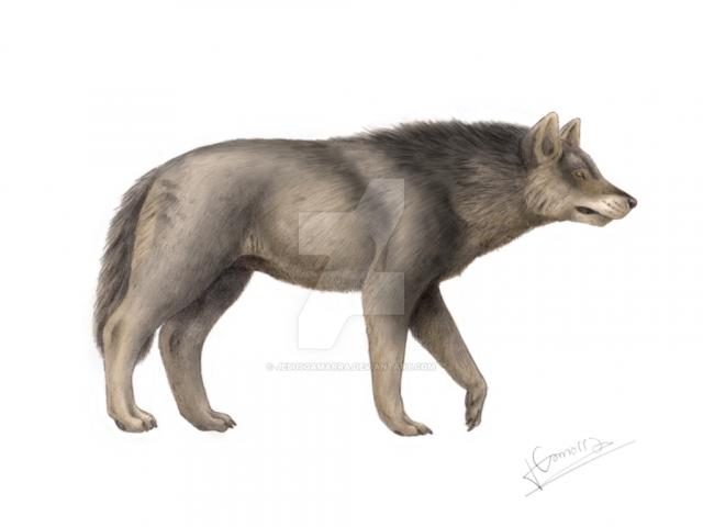 Canis dirus. Fuente