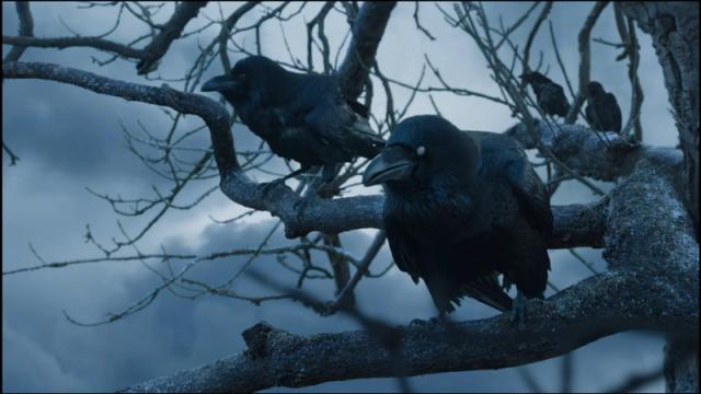Cuervos de Poniente. Fuente