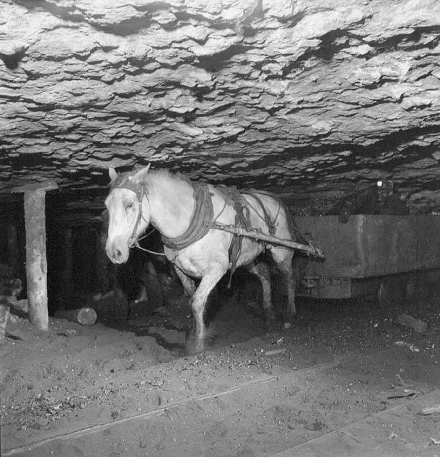 Caballo trabajando en una mina de Aberdeen