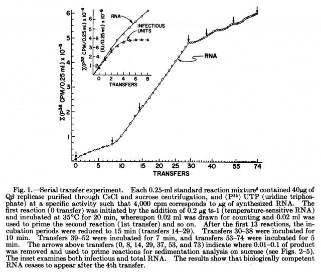 Figura 1 del artículo de Spiegelman en 1967, incluyendo (solo para los lectores más interesados en la bioquímica clásica) la leyenda que muestra algunos detalles experimentales del proceso. A lo largo de los 74 pases tubo a tubo se observa un aumento en la tasa de replicación del RNA (medida por la incorporación de un monómero marcado), lo que correlaciona (como se indica en otra sección del artículo) con el progresivo acortamiento del RNA molde. La gráfica interior muestra la caída en la producción de RNA con capacidad infectiva a partir del pase 4.
