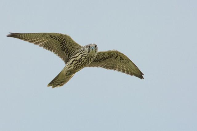 bird-2162612_1920