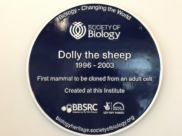 Placa conmemorativa que recuerda a los visitantes del Instituto Roslin de Edimburgo que allí nació Dolly, el primer mamífero clonado a partir de una célula adulta. Fotografía de Lluís Montoliu