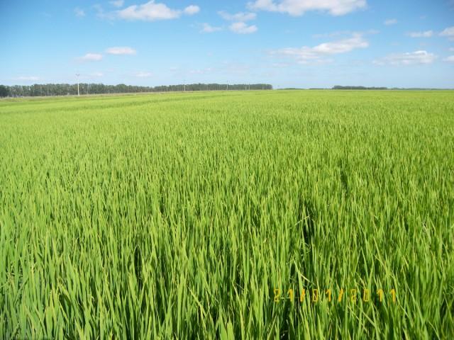 Los cultivos ecológicos