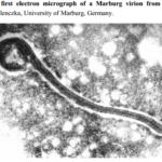 Aventuras marburguesas: un virus aterrador