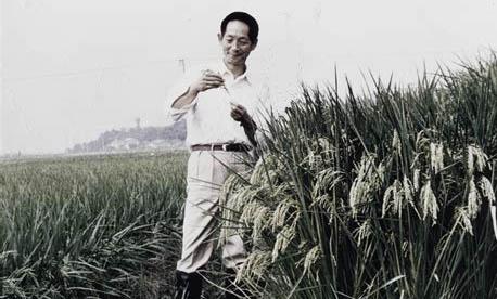 Yuan Lonping