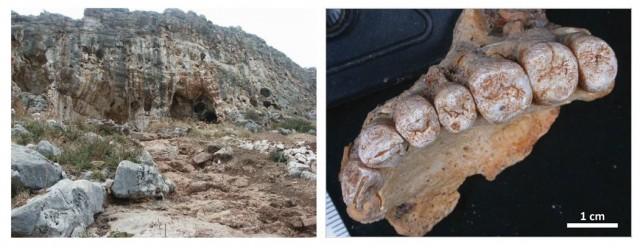 Izquierda: Cueva de Misliya (Monte Carmel, Israel). Derecha: Maxilar Misliya-1 atribuido a Homo sapiens.