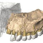 ¿Cómo se determinó la edad del maxilar de la Cueva de Misliya (Israel), el resto fósil de Homo sapiens más antiguo encontrado fuera de África?