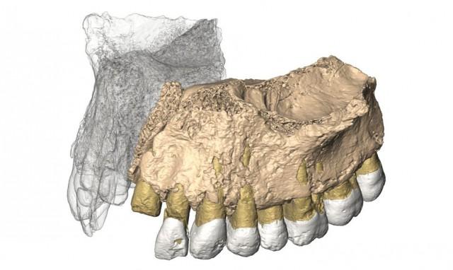 Imagen 3D de Misliya-1