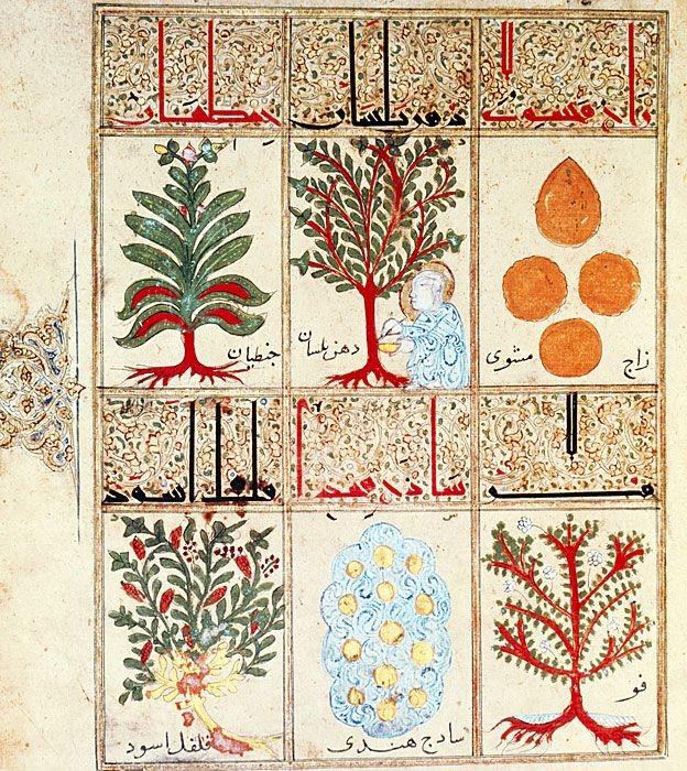 """Derechos de autor de la imagen SCIENCE PHOTO LIBRARYImage captionDel """"Tratado sobre la triaca"""", un manuscrito árabe del siglo XIII, seis hierbas para hacer el remedio. En esa época, la medicina árabe era más avanzada que la europea."""