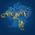 Inesperado contratiempo para las terapias génicas basadas en CRISPR