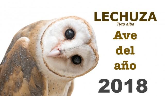 Lechuza, ave del año 2018. Fuente