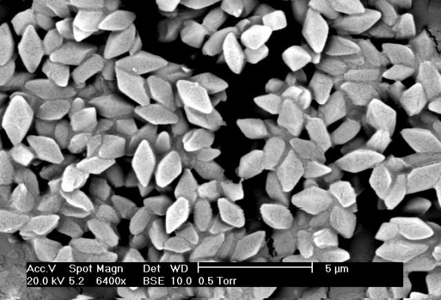 Toxina cristalina de Bacillus thuringiensis