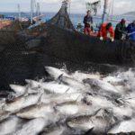 Reservas marinas para atunes, ¿realidad o ficción?