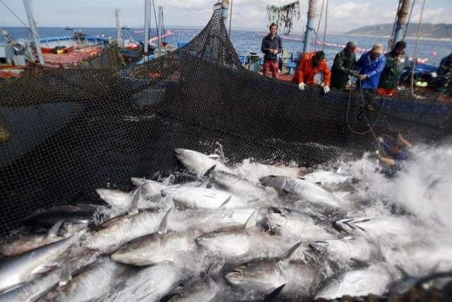 Captura de atunes. Fuente FAO