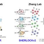 Las sorprendentes CRISPR y sus aplicaciones en diagnóstico
