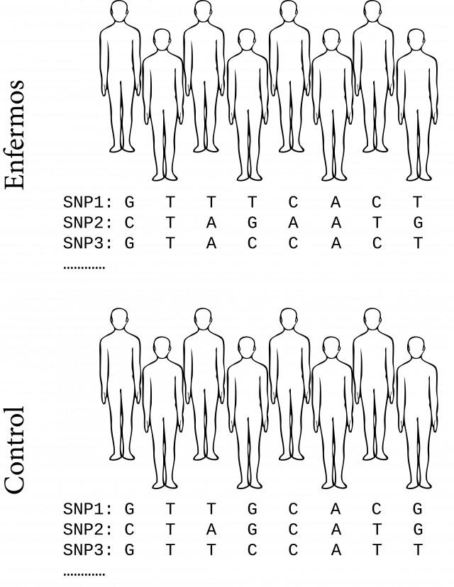 Se comparan las variantes genéticas del grupo con la enfermedad y el grupo control. Las variantes que abundan en el primer grupo y están ausentes en el segundo se asocian a la enfermedad.