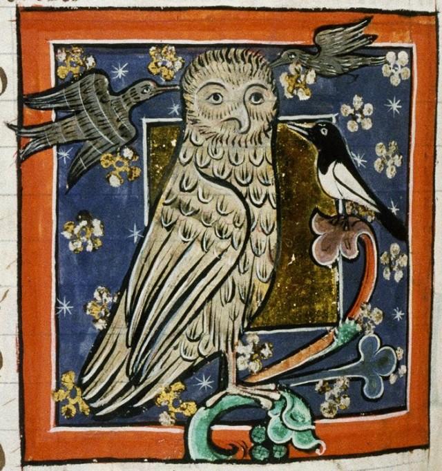 Lechuza medieval. Bodleian Library, MS. Bodley 764, Folio 73v. Fuente