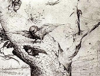 Nido de lechuzas, dibujo de El Bosco. Fuente
