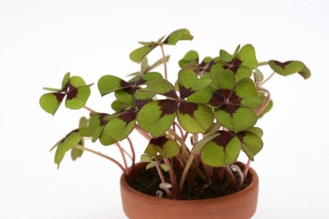 planta maceta
