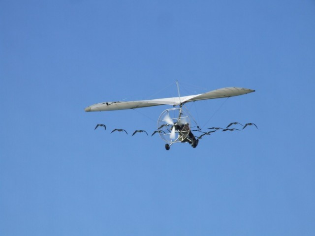 Ornitólogos siguiendo el vuelo de una bandada de gansos