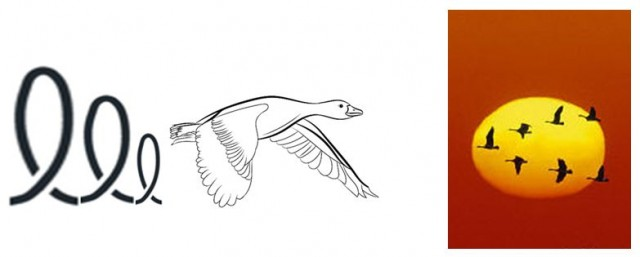 Representación gráfica de las corrientes de aire, ascendentes y descendentes, provocadas por el aleteo del vuelo de los ánsares (izda). A la dcha. véase cómo cada ave se sitúa detrás del vértice del ala del ave que las precede