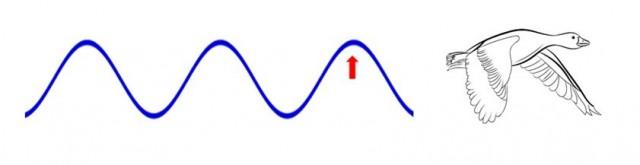 La onda nos muestra la dirección del aire detrás del líder de la manada. El ave que se sitúe donde está la flecha roja, batirá sus alas hacia arriba para aprovechar la corriente ascendente