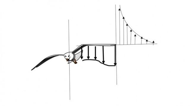 Dirección de los vectores de aire, ascendente y descendente. Fuente: adaptado por el autor de Lissaman, Shollenberger and formation flight in birds