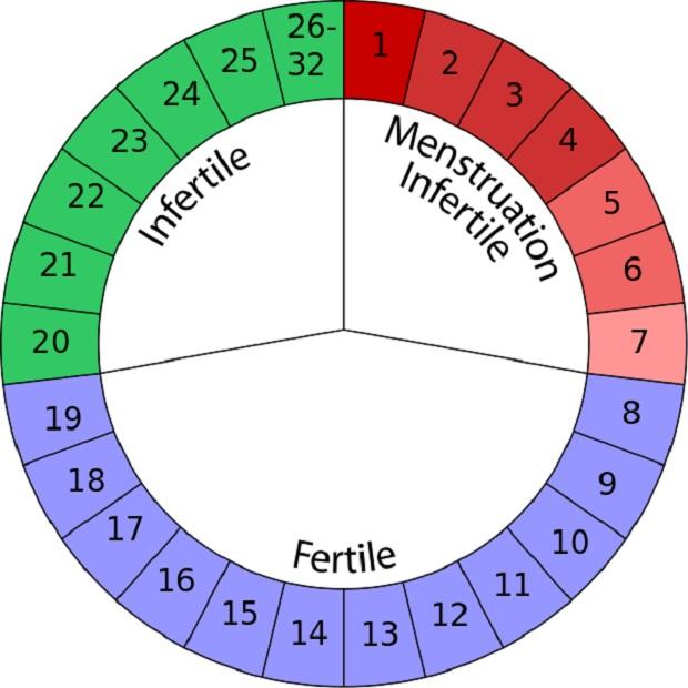 El  ogino-knaus es un método anticonceptivo, de dudosa eficacia, basado en el calendario y los días fértiles e infértiles de la mujer (imagen vía Wikimedia commons)