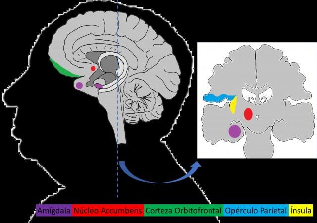 areas cerebrales dolor y placer