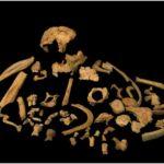 Primera datación directa de Homo antecessor: un ejemplo de trabajo colectivo
