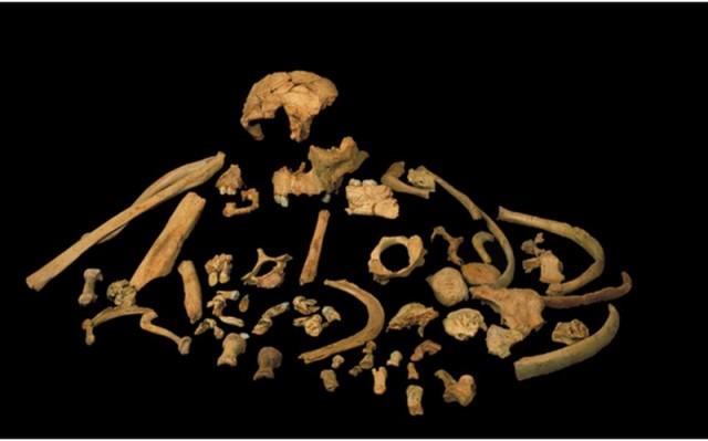 Restos de Homo antecesor encontrados en el nivel TD6 de Atapuerca Gran Dolina (Foto: : J.M. Bermúdez de Castro/M.N.C.N.)