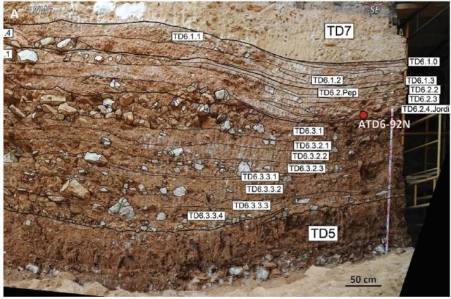 Sección de referencia de Gran Dolina. Se pueden diferenciar todos los subniveles de TD6 (Figura de I. Campaña). La posición del diente ATD6-92 está proyectada en esta sección vertical.