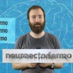 Neuropíldoras 1: el neuroectodermo