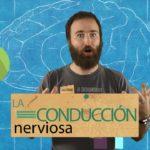 Neuropíldoras 6: la conducción nerviosa