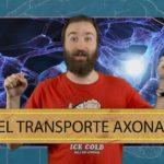 Neuropíldoras 18: el transporte axonal