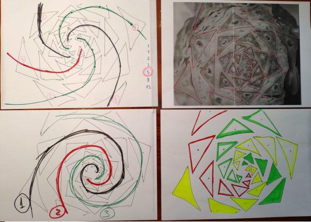 Dibujos sobre la estructura del cogollo